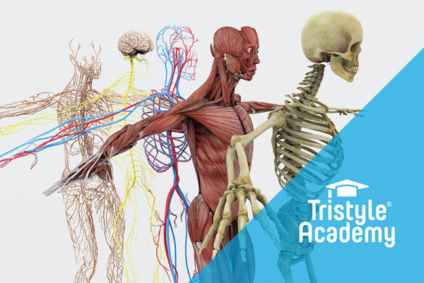 Tristyle Academy, Kurzlehrgang Anatomie